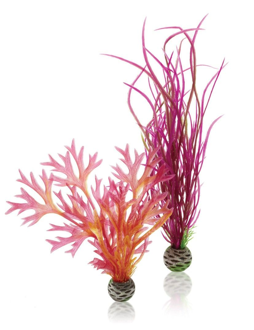 Red/Pink Easy Plant - 2 Pack