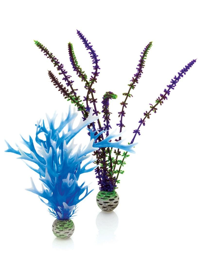 Purple/Blue Easy Plant - 2 Pack