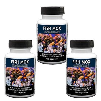 Fish Mox - Capsules 100 Count (Amoxicillin 250 Mg) - 3 Pack