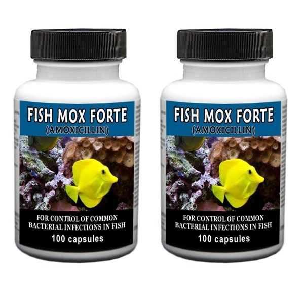 2 - Pack Of Mox Forte 100 Count