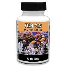fish cin