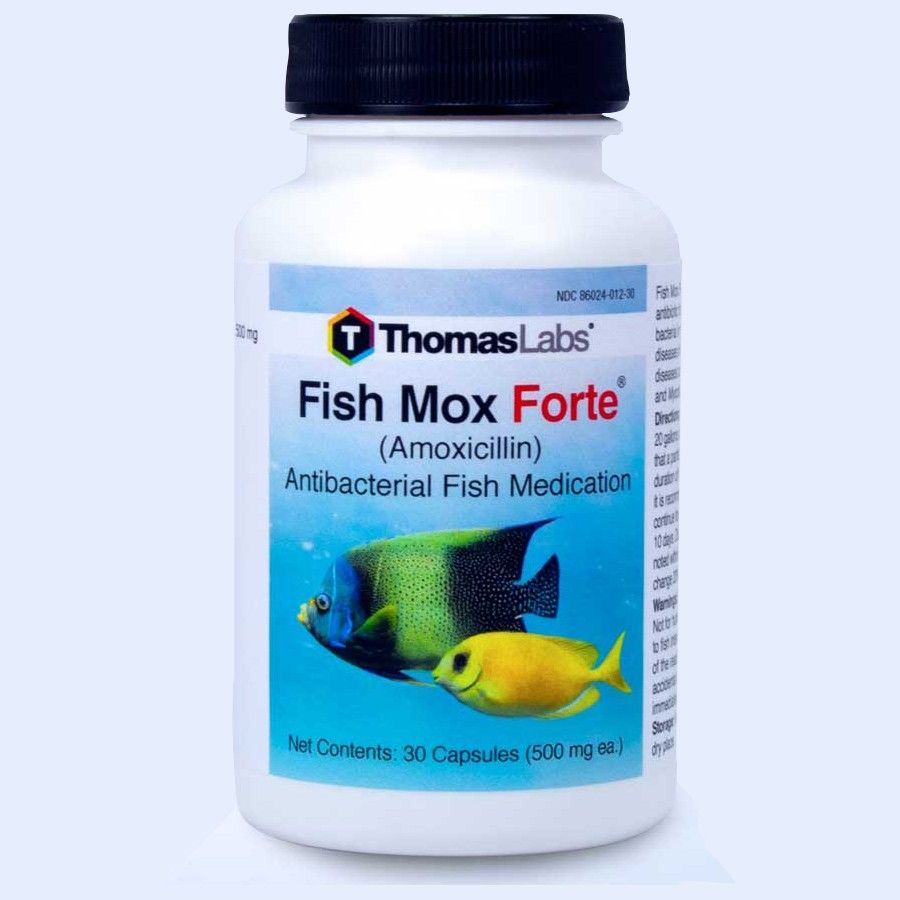 Fish Mox Forte - Amoxicillin 500Mg (30 Count)