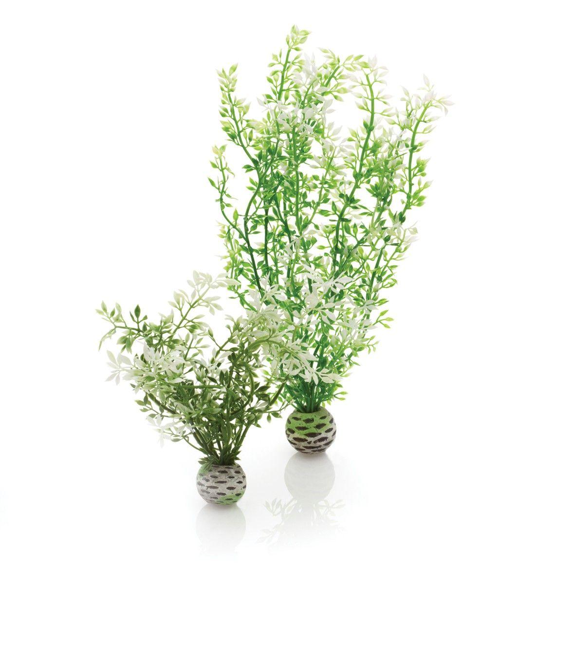 Winter Flower Plants